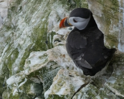Puffin-Spotting-at-RSPB-Bempton-Cliffs-attractions